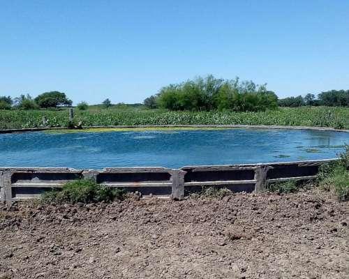 Yaco Servicios Agropecuarios Ofrecen