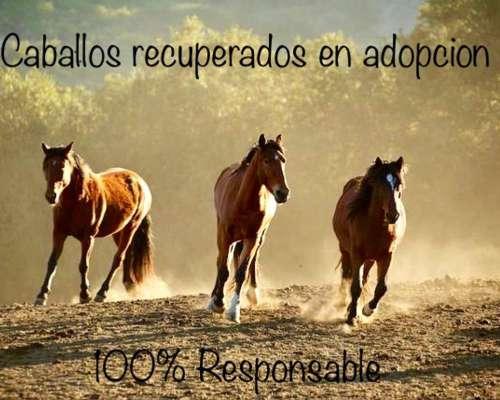 Buscamos Adoptantes 100% Responsables