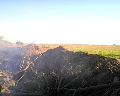 Desmalezado y Desmonte en Campos 2241674884