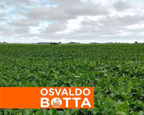 14 Hectáreas Agrícolas en Entre Ríos