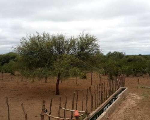 Campo San Juan, Valle Fértil, Usno