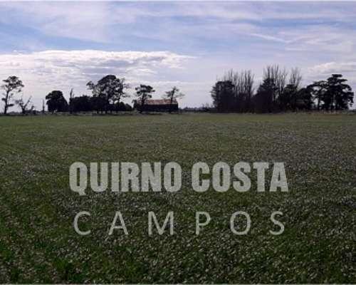 Campo Necochea 258 HA Mayormente Agricola. Cerca PTO Quequen