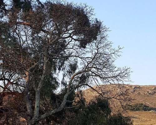 1000 Has Campo de Sierra Pastosa con %50 Valles Fertiles