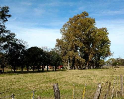 San Andres de Giles, Espora Excelente Campo