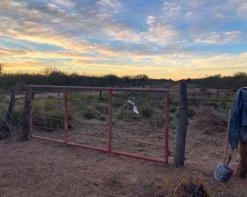 Excelente Campo Ganadero Cría/recría en San Luis