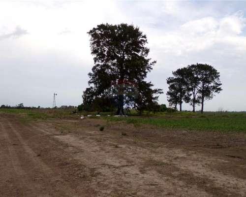Campo Agricola - Pujato Norte