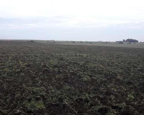 71 Has. 100% Agrícolas en Irazusta - Entre Ríos