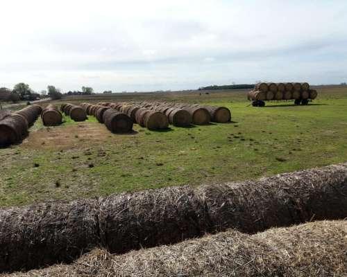 Rollos de Pastura, Cebada y Sorgo