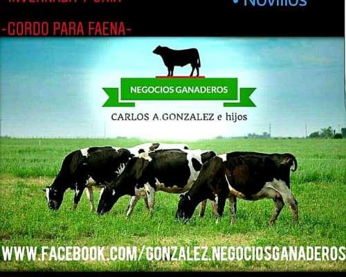 Compra y Venta Hacienda Directa a Productor -contado-