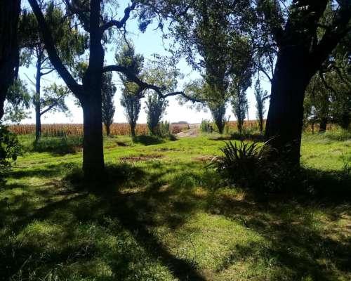 Campo Agrícola en Chacabuco