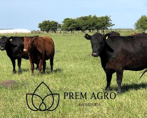 Prem Agro Asesoramos Y Brindamos Servicio Técnico A Empresas