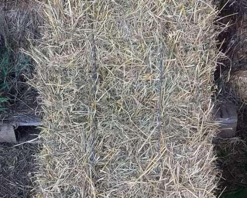 Fardos de Pasto Mezcla