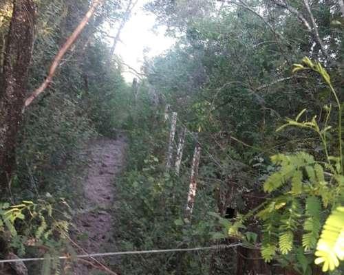 Formosa. Palo Santo 1200 Has, Monte A Desarrollar.