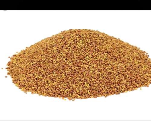 Vendo Alfalfa Grupo:9 Saladina Inta