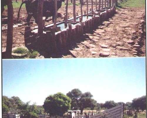 6000 Has Victorica La Pampa Plazo 7 Años En Kgs De Novillos