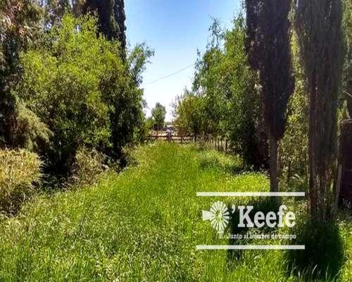 280 Has. Campo Mixto en Ranchos. Acceso Sobre Asfalto