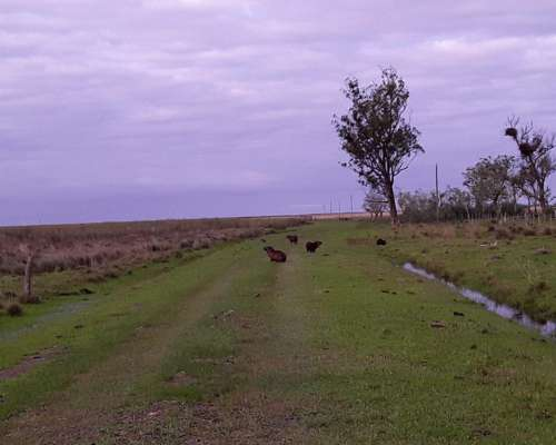 Campo Ganadero en Ituzaingo, Corrientes