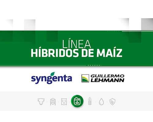 Híbridos De Maíz - Línea Syngenta