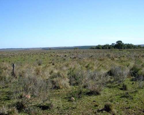 Vendo Campo en Misiones a 35 km de Posadas Sobre Ruta 12