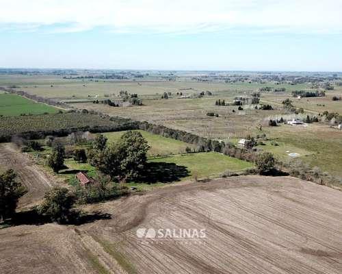 140 Has. Campo Alomado con Arboleda, Mixto