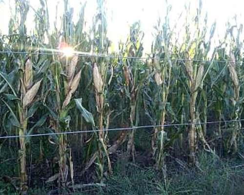 Se Alquilan 7500 H 100% Agricolas para 2019 BS AS y L Pampa