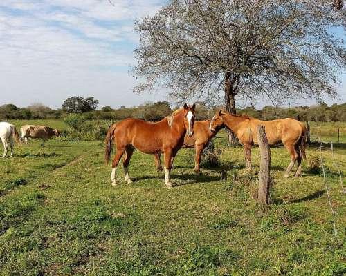 9campo en Chaco 2700 Has Zona Machagai 3624384426