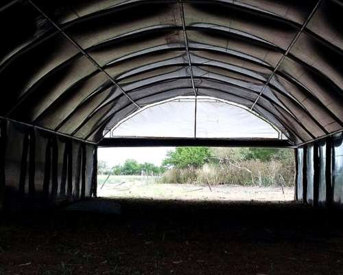 Cerdos - Cama Profunda - Túnel de Viento
