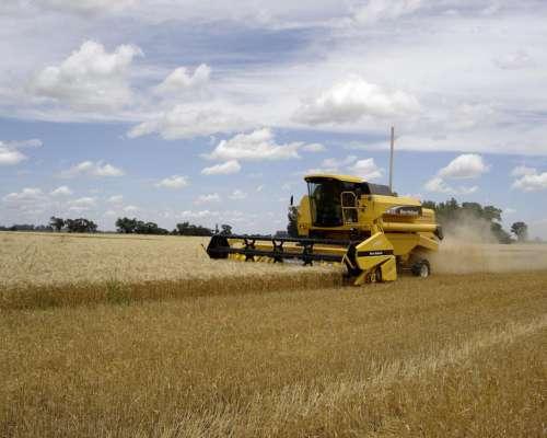 Fertilizante Foliar Para Trigo Y Verdeos