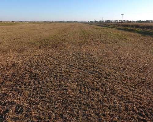 Campo Agrícola en Guido Spano, Prov. de Buenos Aires.