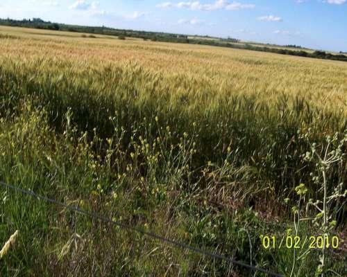 60 Hectareas Agricolas sin Mejoras