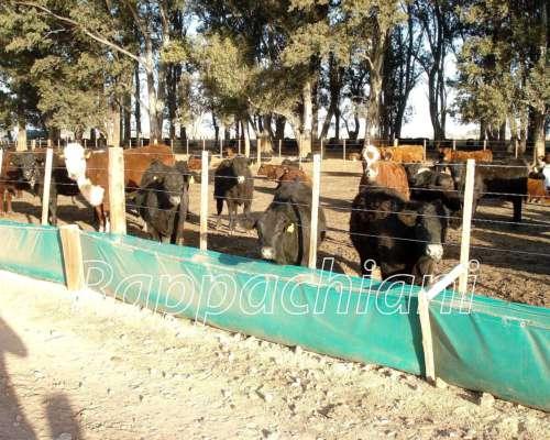 Comederos de Lona para Feed- LOT