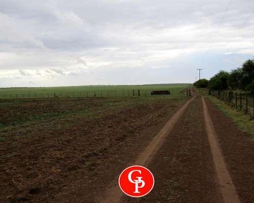 En Venta, 729 Has, Winifreda -LA Pampa-.