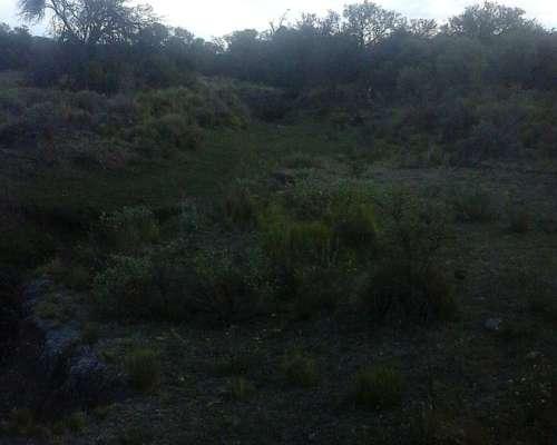 Dueño Vende . Campo 191 Hectáreas.