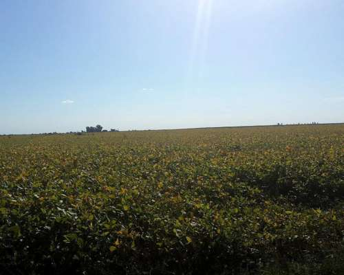 Agricola Gran Campo