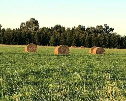 Rollos de MIX de Pastura Natural