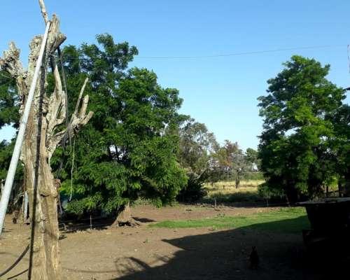 9 Hectarias. el Bonete. Partido Loberia