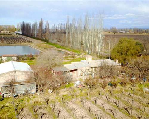 9 Has Finca con Viñedos en Agrelo, Mendoza