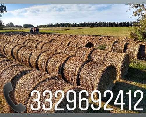 Rollos de Pasto Natural $850