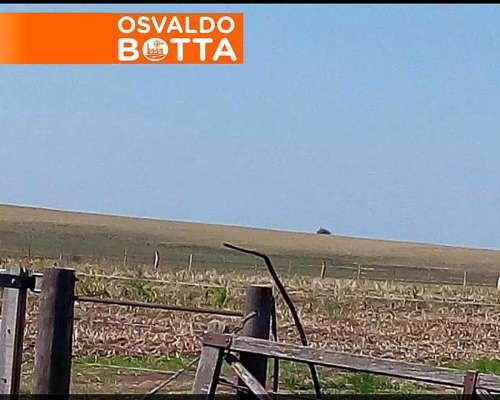 25 Has. Agrícolas, en Urdinarrain, Entre Rios