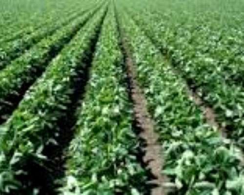 Roldan Agrícola 100% 15 Hectareas, Entrega 50%