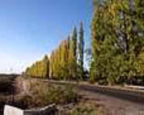 Campo Distrito Chapanay, San Martín, Mendoza 115ha