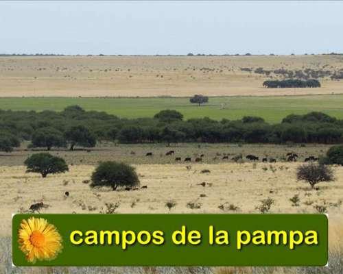 Venta Campo 730 Ha - Dpto. Toay la Pampa