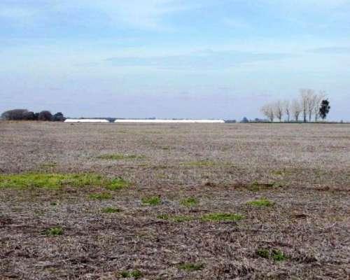 Ba2867 Venta Agricola 472 Has Chascomus, Buenos Aires