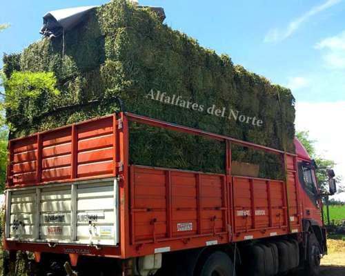 Fardos de Alfalfa Excelente Calidad - Santiago del Estero