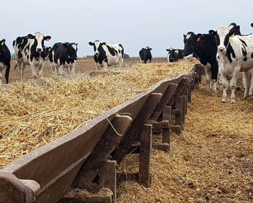 Comedero Batea Madera 5m X 1.10m P/20 Vacas Tambo Enero 2020