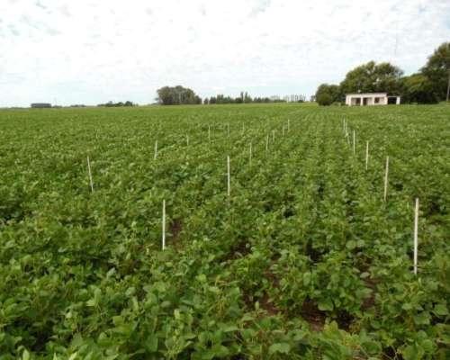 Fertilizante Foliar para Soja y Otras Leguminosas