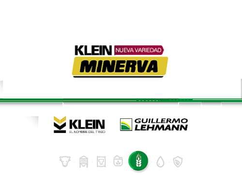Klein Minerva - Variedad de Trigo Klein - Semillas