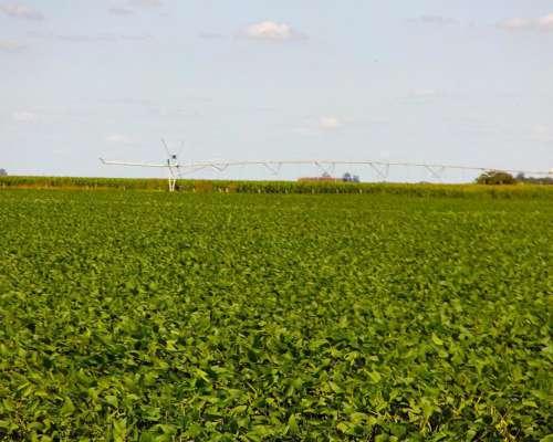 Oportunidad 240 HEC Agrícolas Carrilobo Calchin Sacanta