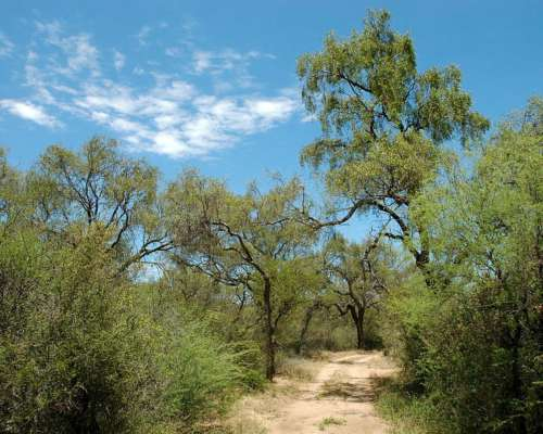 Compra Campo con Monte Natural, para Inversor