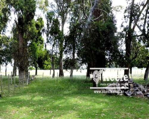 Campo en Venta. Punta Indio. BS Aires. 57 Has. Ganadero